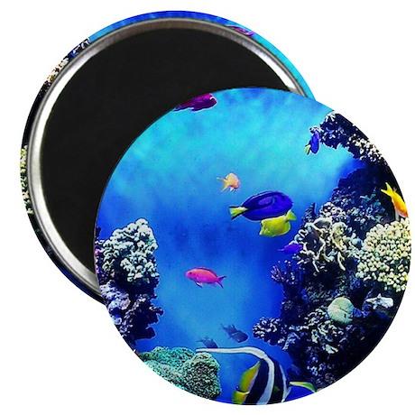 Monterey Bay Aquarium Magnet