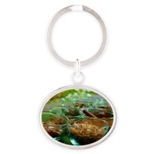 Herbals Oval Keychain