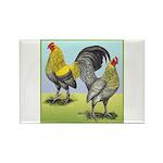 Lemon Blue OE Pair Rectangle Magnet (100 pack)