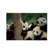 Panda Babies Rectangle Magnet