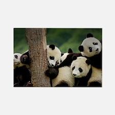 Panda Babies Rectangle Magnet