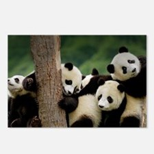Panda Babies Postcards (Package of 8)