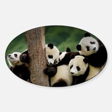 Panda Babies Decal