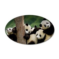 Panda Babies Wall Decal