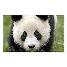 Panda Decal