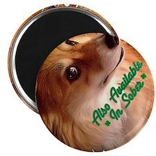 Irish Corgi Dog - Sober? Magnets