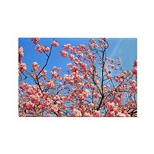 Spring cherry Rectangle Magnet