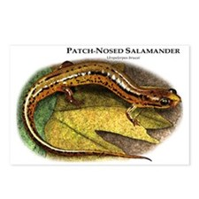 Patch-Nosed Salamander Postcards (Package of 8)