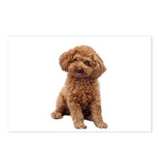 Poodle-(Apricot2) Postcards (Package of 8)