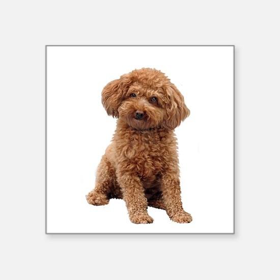 "Poodle-(Apricot2) Square Sticker 3"" x 3"""