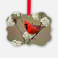 Red Cardinal Photo Ornament