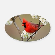 Red Cardinal Photo Oval Car Magnet