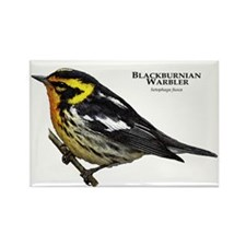 Blackburnian Warbler Rectangle Magnet