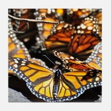 Monarch Butterfly 2 Square Tile Coaster