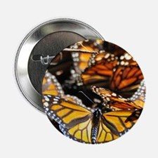 """Monarch Butterfly 2 Square 2.25"""" Button"""