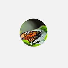 Monarch Butterfly 4 Square Mini Button