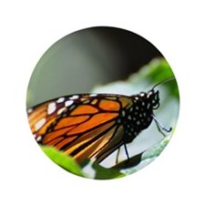 """Monarch Butterfly 4 Square 3.5"""" Button"""