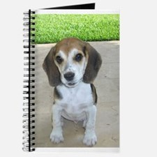 Adorable Beagle Puppy Journal