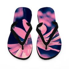 Dreamy daisy  Flip Flops