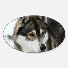 Husky Decal