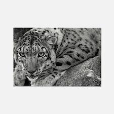 Snow Leopard 4 Rectangle Magnet
