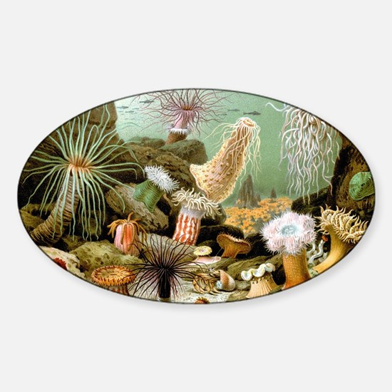 Vintage Sea Anemones Sticker (Oval)