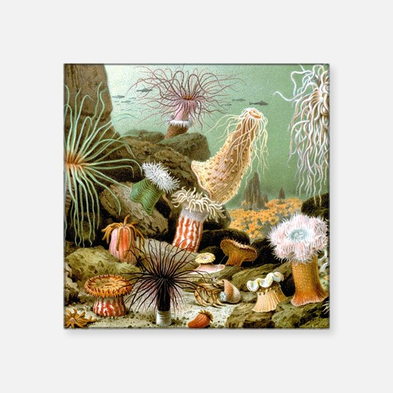 "Vintage Sea Anemones Square Sticker 3"" x 3"""