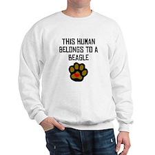 This Human Belongs To A Beagle Sweatshirt