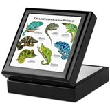 Chameleon Square Keepsake Boxes