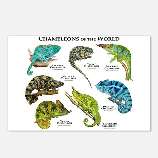 Chameleons of the World Postcards (Package of 8)