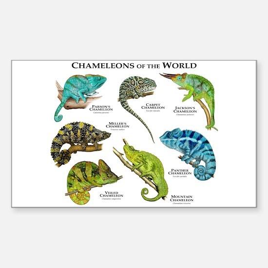 Chameleons of the World Sticker (Rectangle)