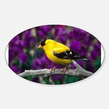 American Goldfinch Bird Black and Yellow Decal