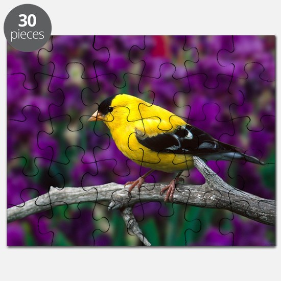 American Goldfinch Bird Black and Yellow Puzzle