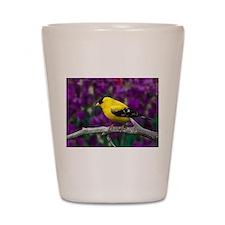 American Goldfinch Bird Black and Yellow Shot Glas