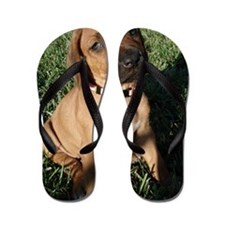 Rhodesian Ridgeback puppy  Flip Flops