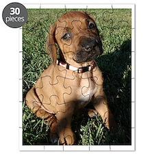 Rhodesian Ridgeback puppy  Puzzle