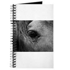 Through the Eye of a Horse Journal