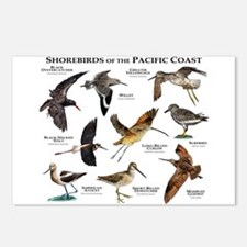 Shorebirds of the Pacific Postcards (Package of 8)