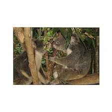 Kissing Koalas Rectangle Magnet