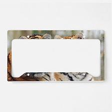 Tigers License Plate Holder