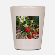 Strawberries in Summer Shot Glass
