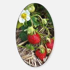 Strawberries in Summer Sticker (Oval)