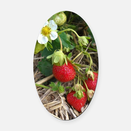 Strawberries in Summer Oval Car Magnet