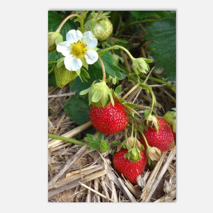 Strawberries in Summer Postcards (Package of 8)