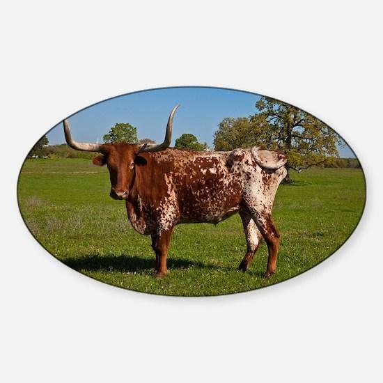 Texas Longhorn Sticker (Oval)