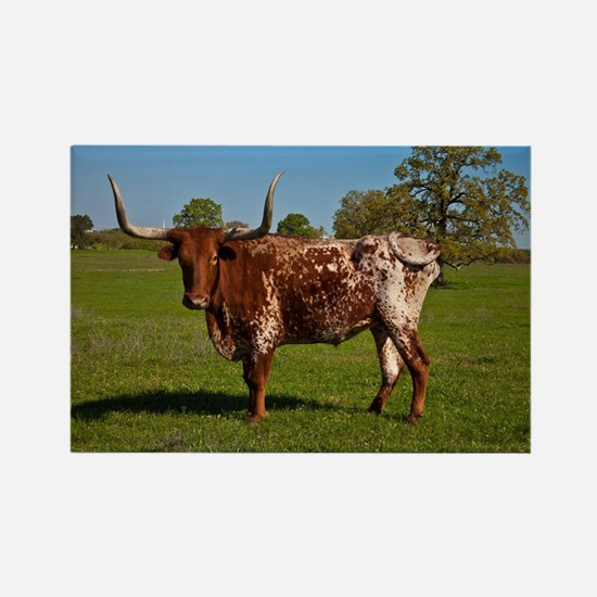 Texas Longhorn Rectangle Magnet