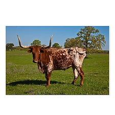 Texas Longhorn Postcards (Package of 8)
