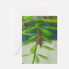 Shrimp Descending a Milfoil Greeting Cards