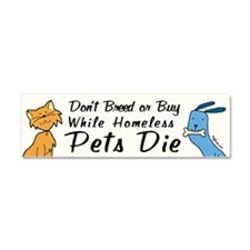 Funny Homeless pets Car Magnet 10 x 3