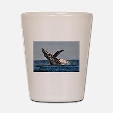 Humpback Whale 2 Shot Glass